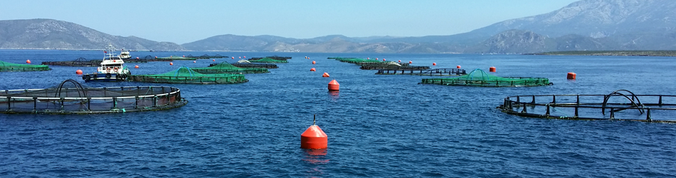 Longline Environment Products and Services