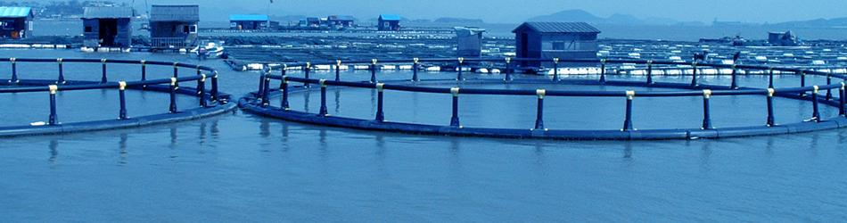 Aquaculture Insurance